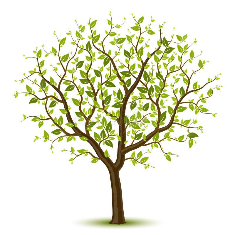 зеленый вал leafage иллюстрация вектора
