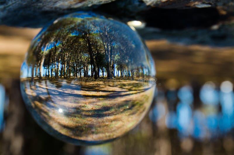 Зеленый взгляд леса в ясном кристаллическом стеклянном шарике стоковые фото