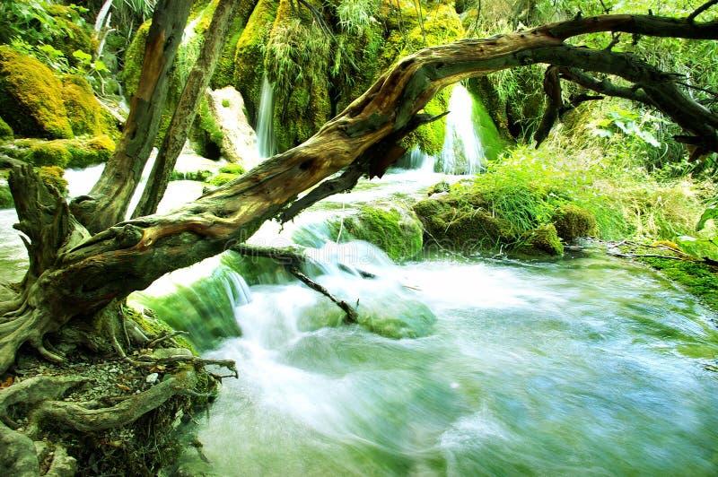зеленый водопад стоковые фотографии rf