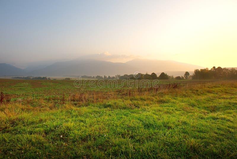 зеленый восход солнца лужков стоковое изображение