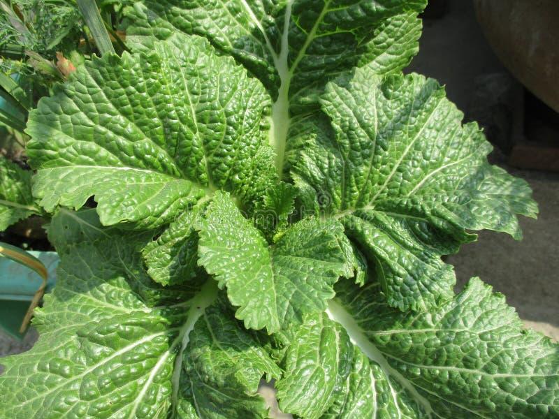 зеленый густолиственный овощ стоковое фото rf