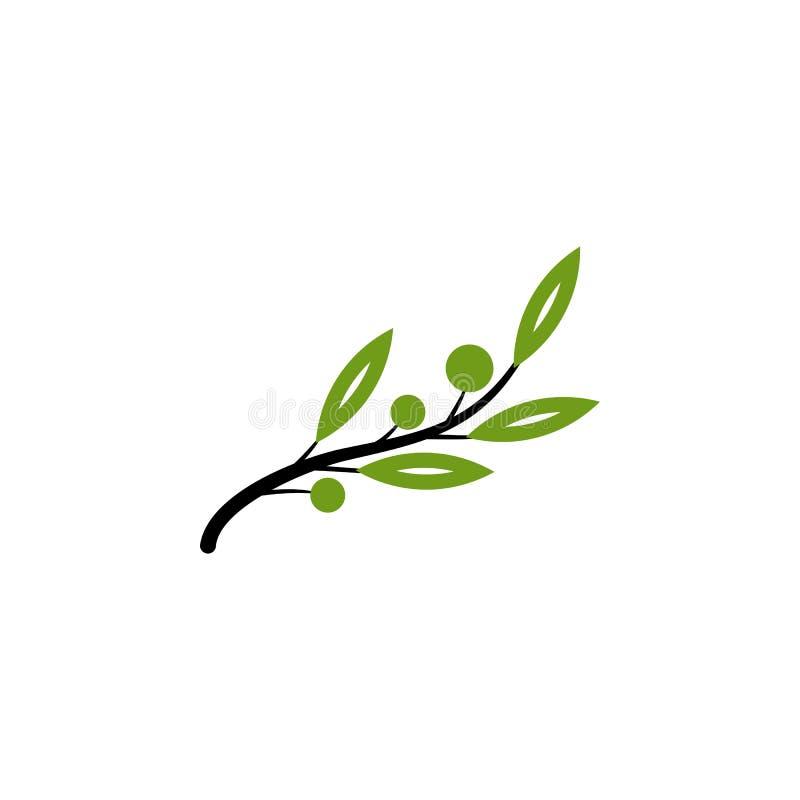 Зеленый естественный вектор оливкового дерева иллюстрация вектора