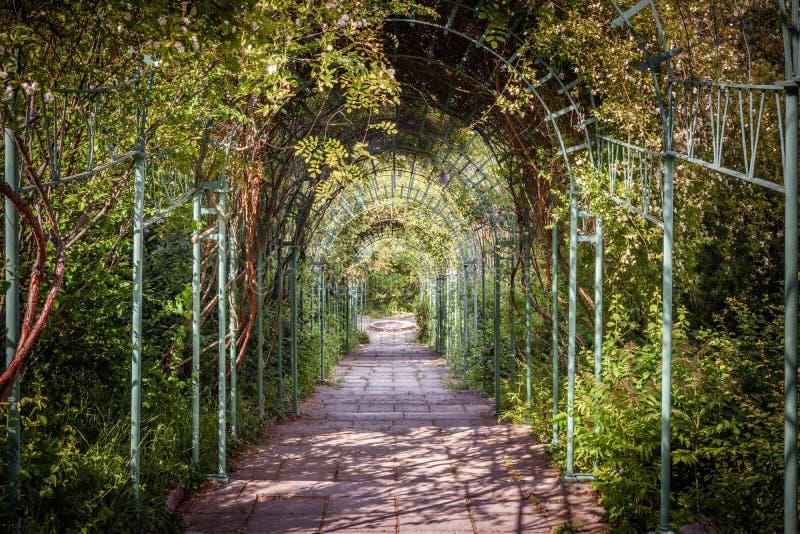 Зеленый естественный тоннель заводов и цветков в лете стоковое изображение