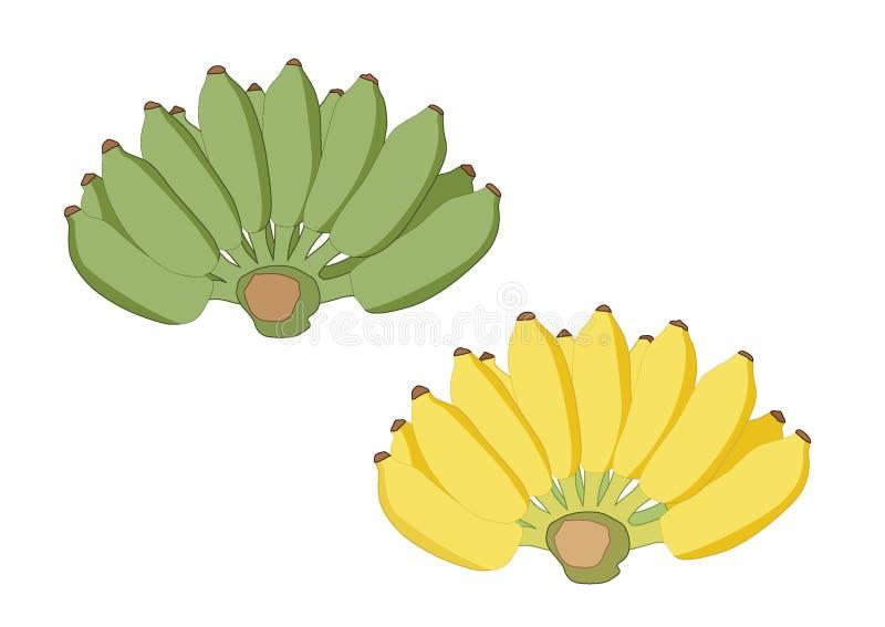 Зеленый и желтый банан на белом векторе иллюстрации предпосылки иллюстрация штока