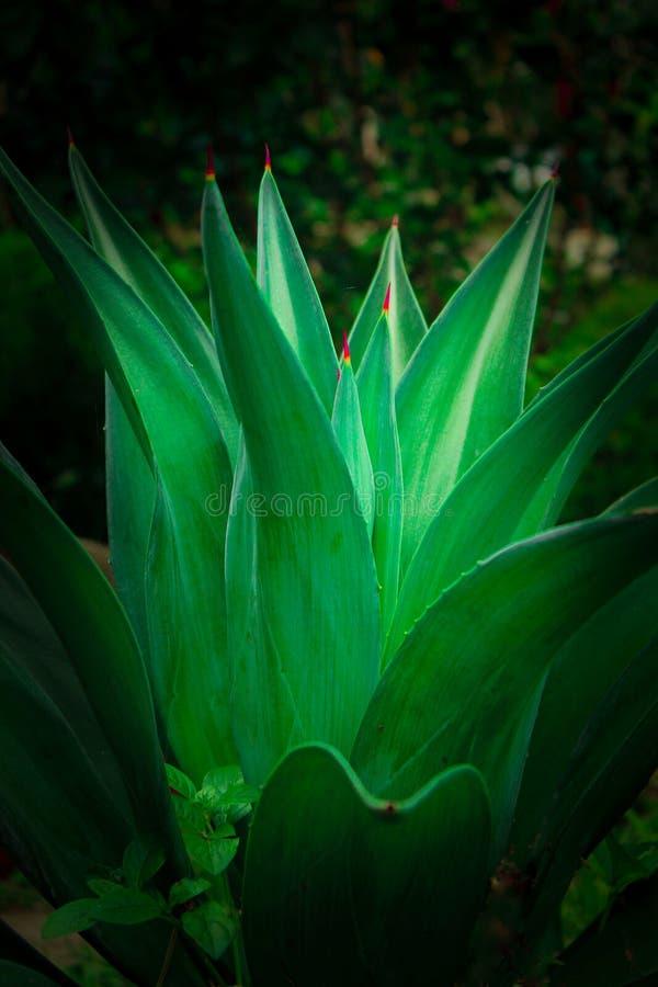 Зеленый кактус стоковое изображение rf