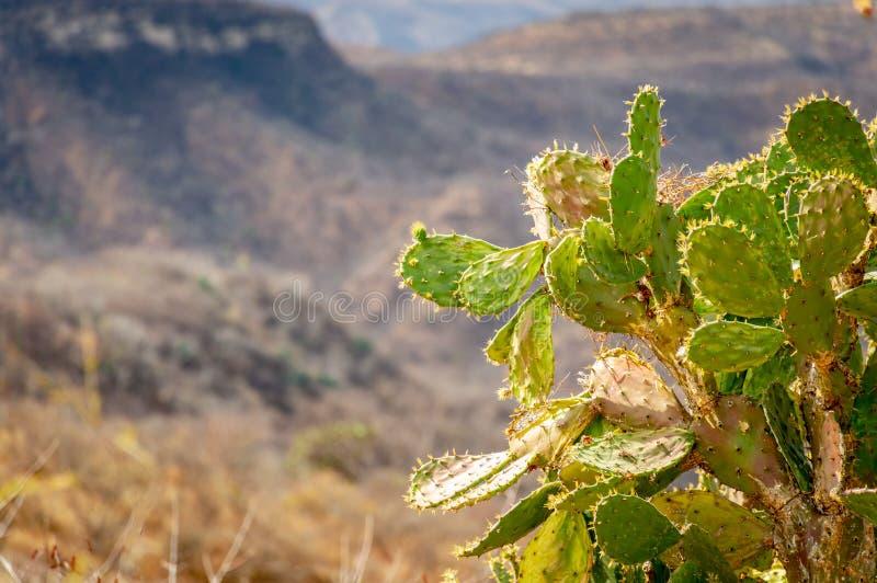 Зеленый кактус на дороге стоковое фото