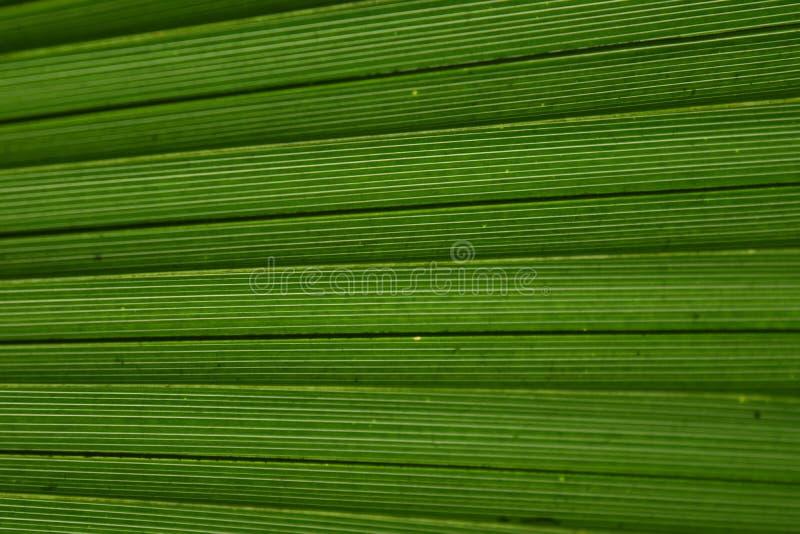 Зеленый конец-вверх структуры лист ладони стоковая фотография rf