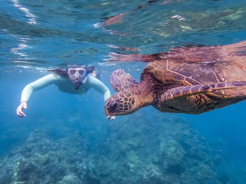 Зеленый конец морской черепахи вверх по профилю с Snorkeler в предпосылке стоковое фото rf