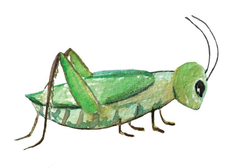Зеленый кузнечик на белой предпосылке иллюстрация штока