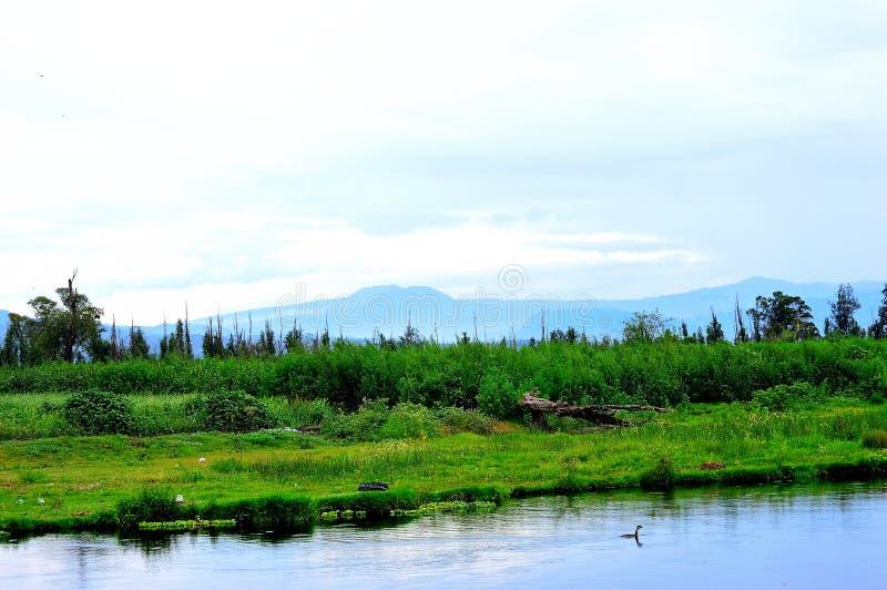 Зеленый ландшафт на озере с голубой предпосылкой холмов стоковое изображение rf