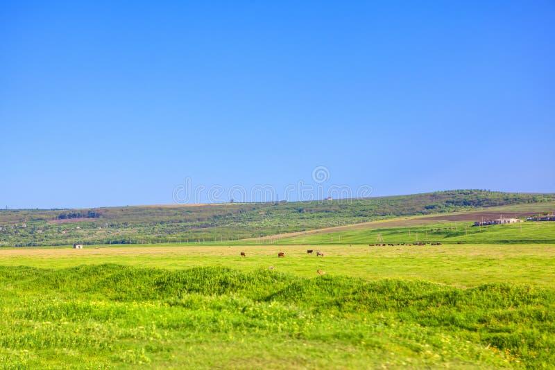 Зеленый ландшафт страны стоковое изображение rf