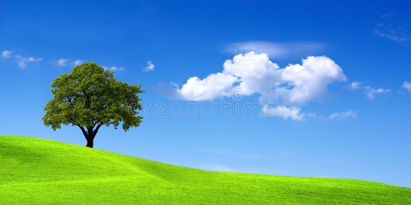 зеленый ландшафт стоковая фотография rf
