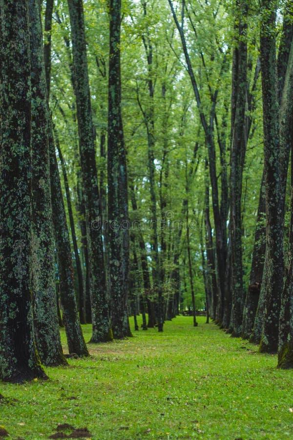 Зеленый лес с путем стоковые фотографии rf