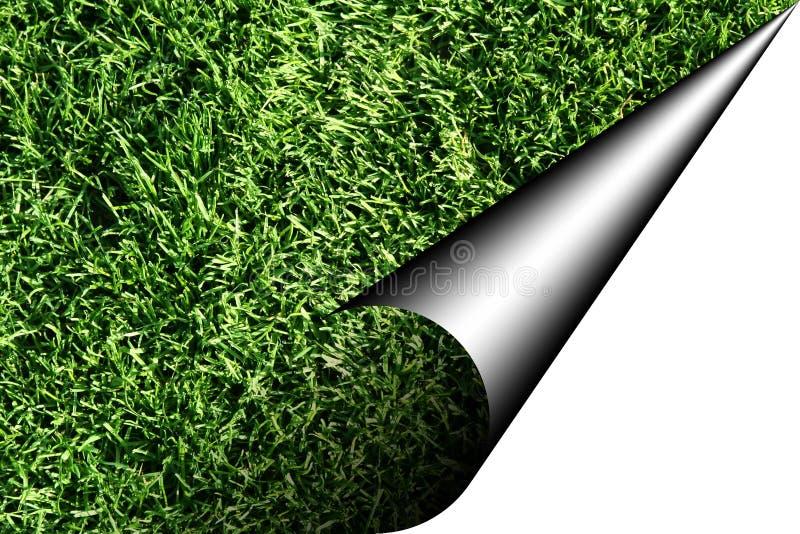 зеленый лист иллюстрация вектора