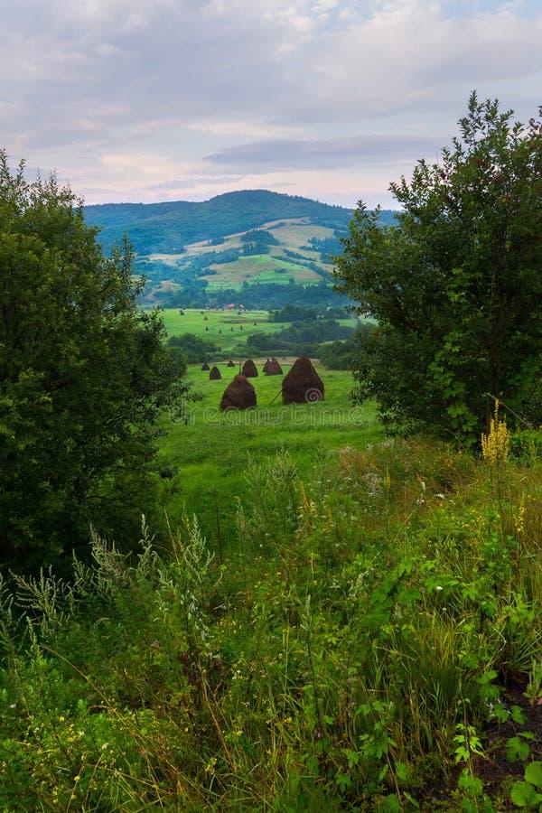 Зеленый луг среди деревьев с стогами сена на горных склонах и на фоне облачного неба Место для стоковые изображения rf