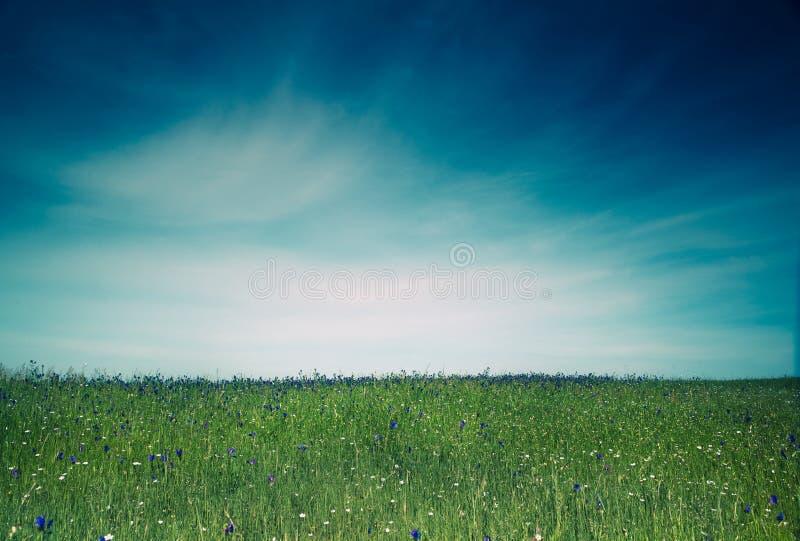 зеленый лужок стоковая фотография rf