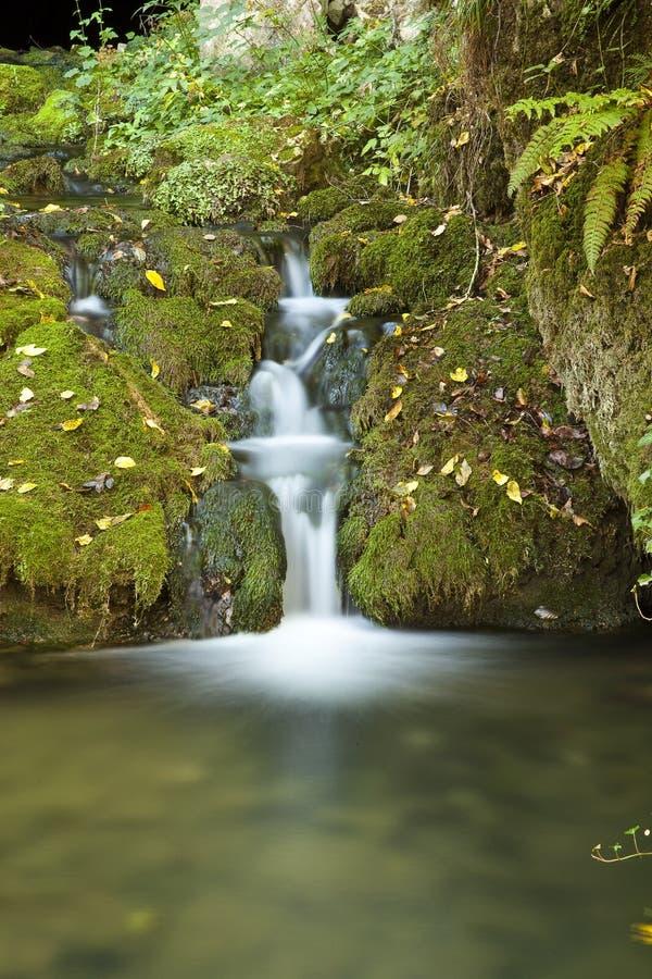 зеленый малый водопад стоковое фото