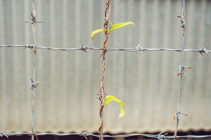 Зеленый молодой завод проползать, альпинист, типичный тропический завод джунглей с зелеными листьями под солнечным светом с краси стоковые фото