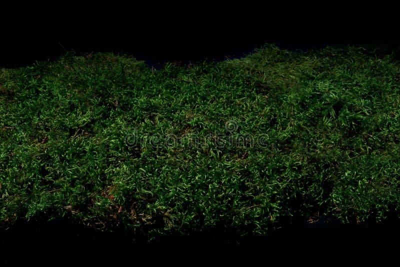 Зеленый мох леса вытекая от темноты стоковое изображение