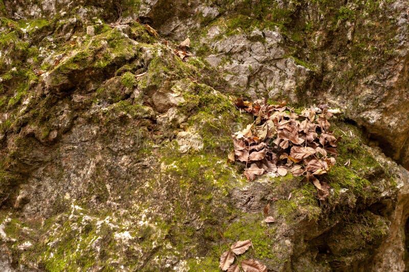 Зеленый мох на камнях стоковые фотографии rf