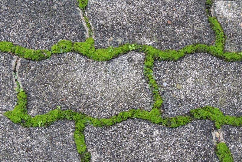 зеленый мох на плитке тротуара в парке стоковое фото