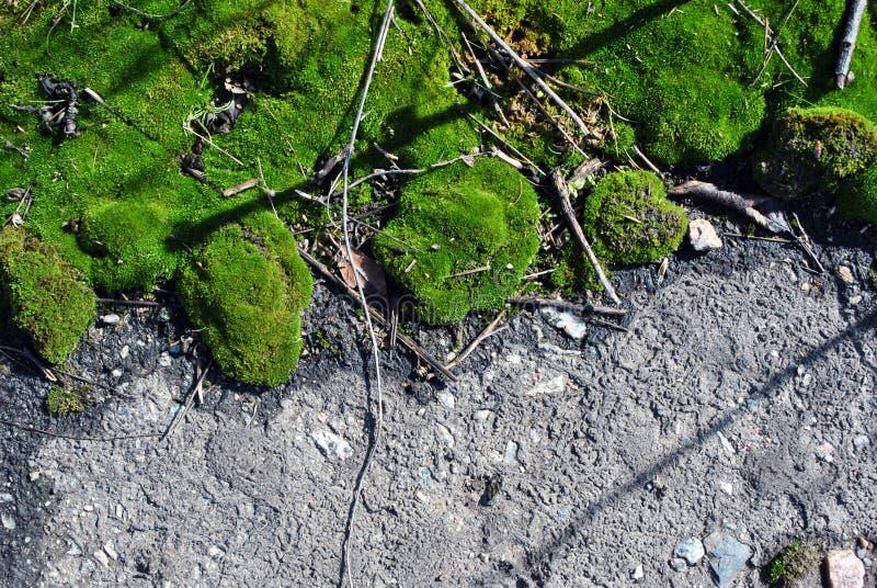 Зеленый мох на текстуре дороги асфальта, горизонтальной предпосылке стоковое изображение rf