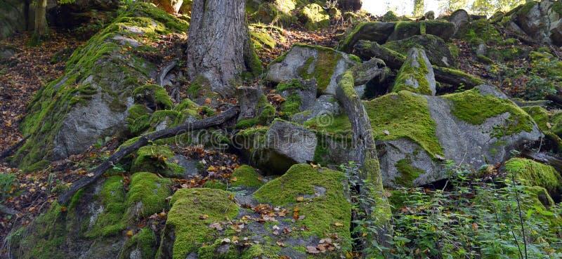 Зеленый мох на утесах и деревьях в древесинах стоковая фотография
