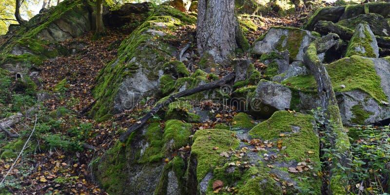 Зеленый мох на утесах и деревьях в древесинах стоковое фото rf