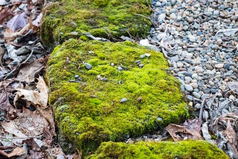 Зеленый мох покрыл утесы, мшистый утес стоковая фотография rf