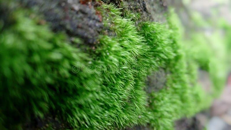 зеленый мох стоковое фото rf