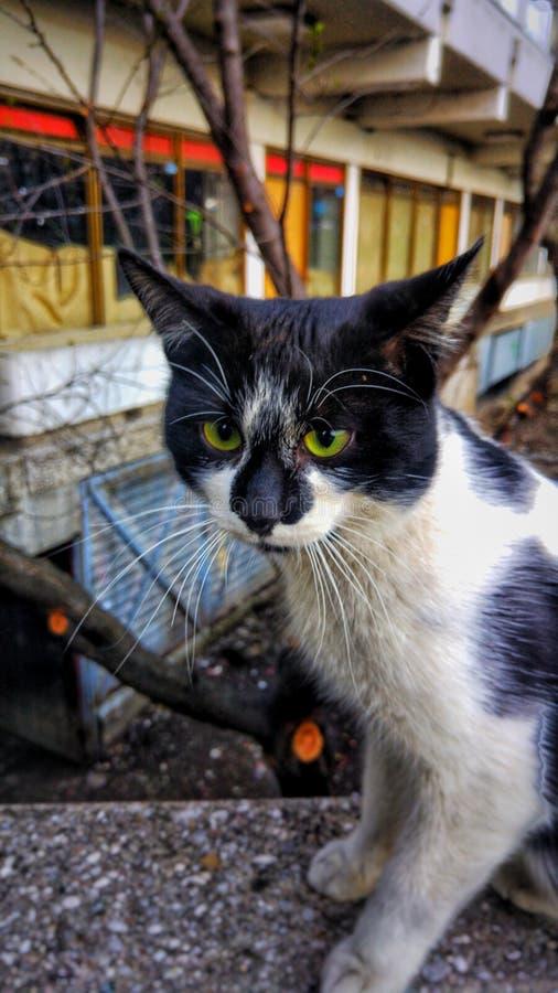 Зеленый наблюданный кот наблюдающ пока сидящ около дороги стоковые изображения rf