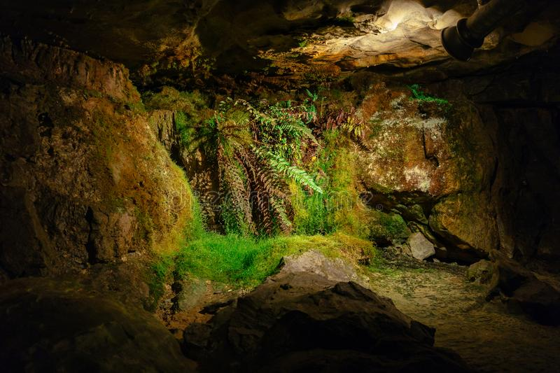 Зеленый папоротник-орляк растя внутри темной пещеры только с помощью искусства стоковое изображение rf
