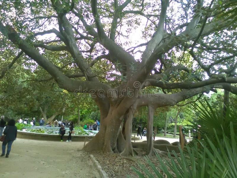 Зеленый парк дерева стоковое фото rf