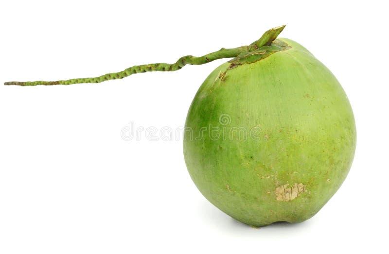 Зеленый плодоовощ кокоса изолированный на белой предпосылке, пути клиппирования стоковое фото