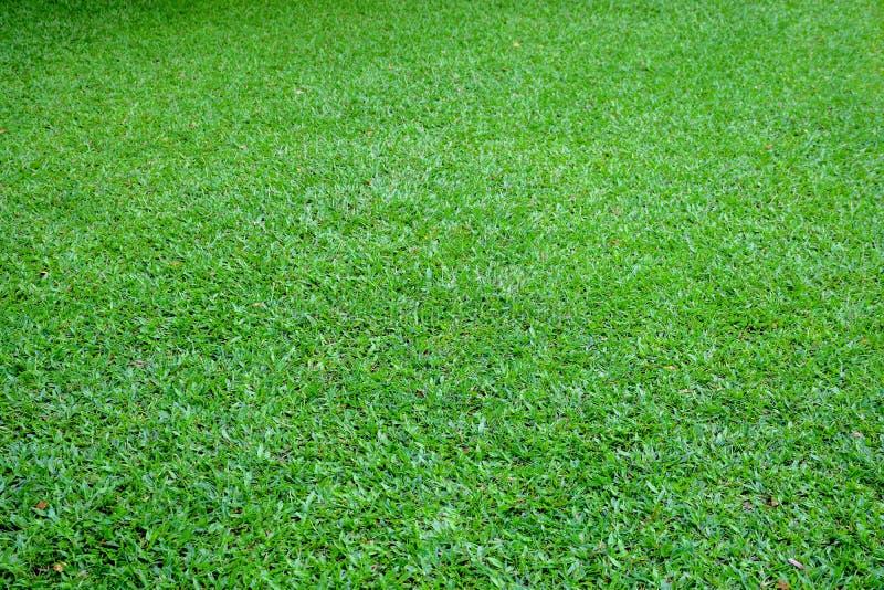 Зеленый пол лужайки стоковые фото