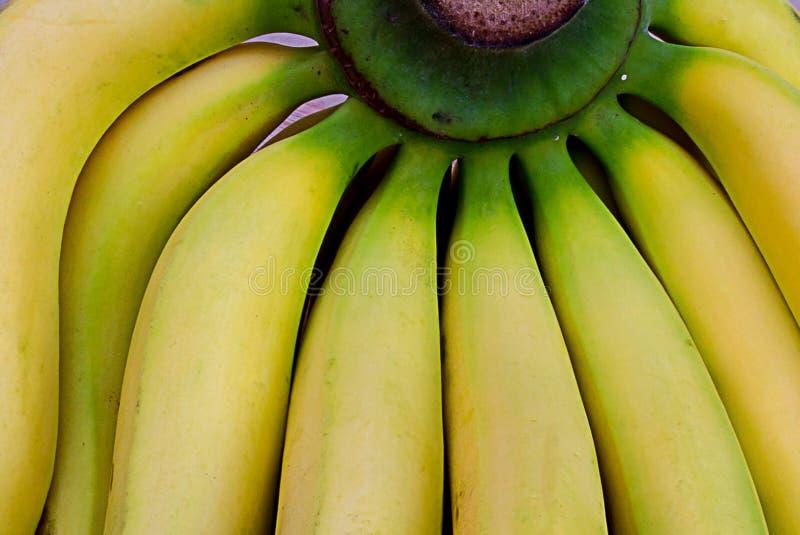 Зеленый пук свежих желтых бананов стоковое фото