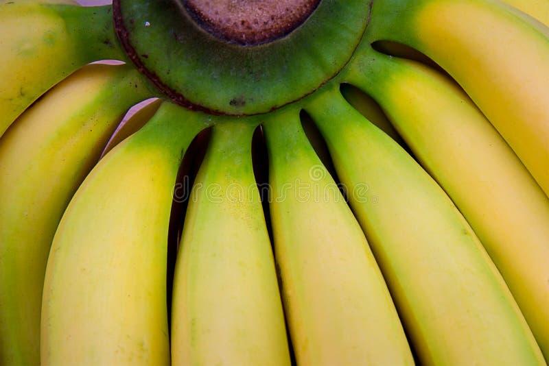 Зеленый пук свежих желтых бананов стоковые фотографии rf