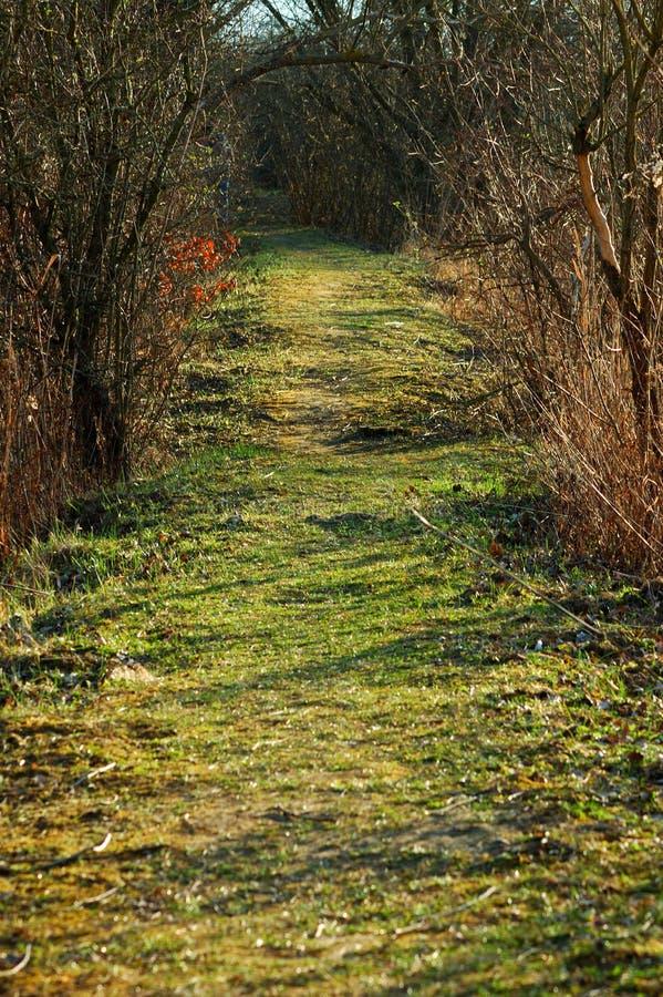 Зеленый путь в лесе весной стоковые изображения rf