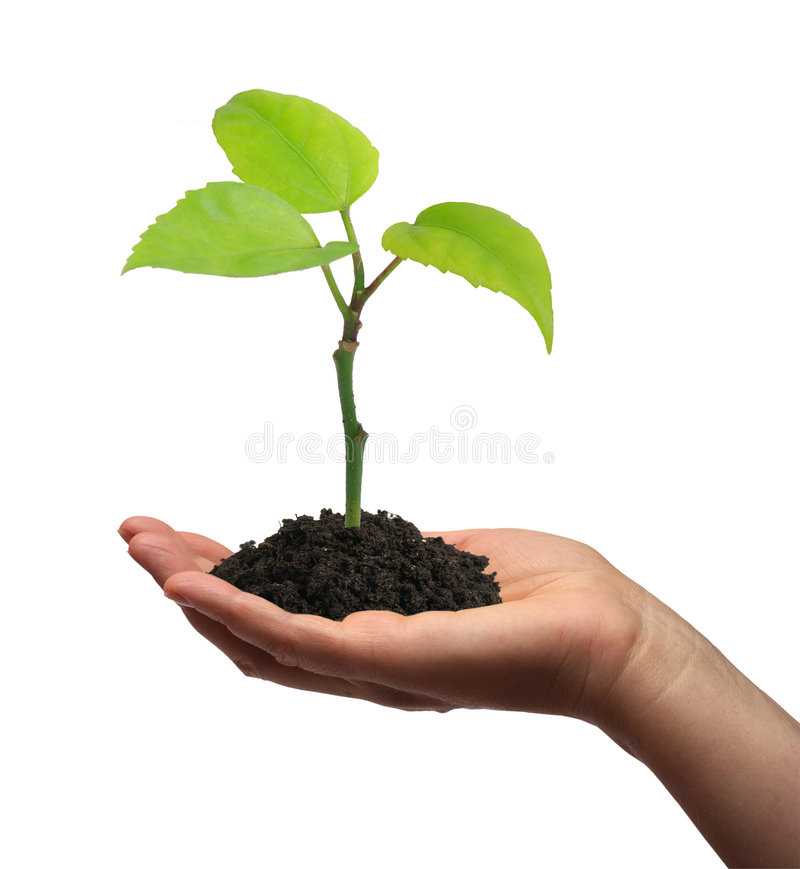 зеленый растущий завод руки стоковая фотография rf