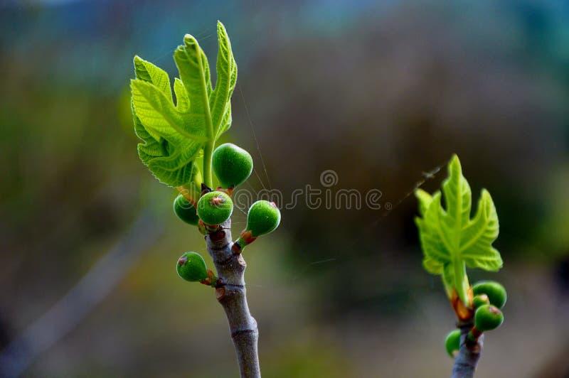 Зеленый росток весны в Paphos стоковые фото