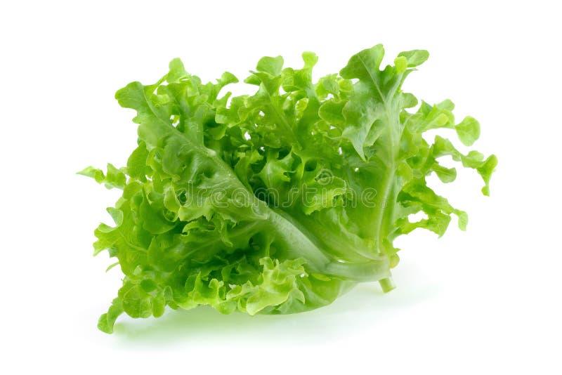 Зеленый салат лист дуба изолированный на белой предпосылке стоковое фото