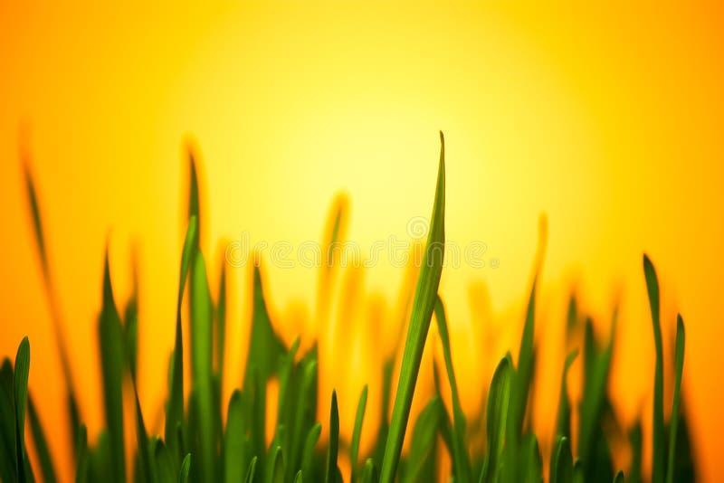 зеленый свет травы теплый стоковая фотография rf