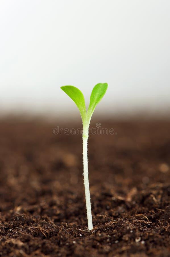 зеленый сец стоковые изображения