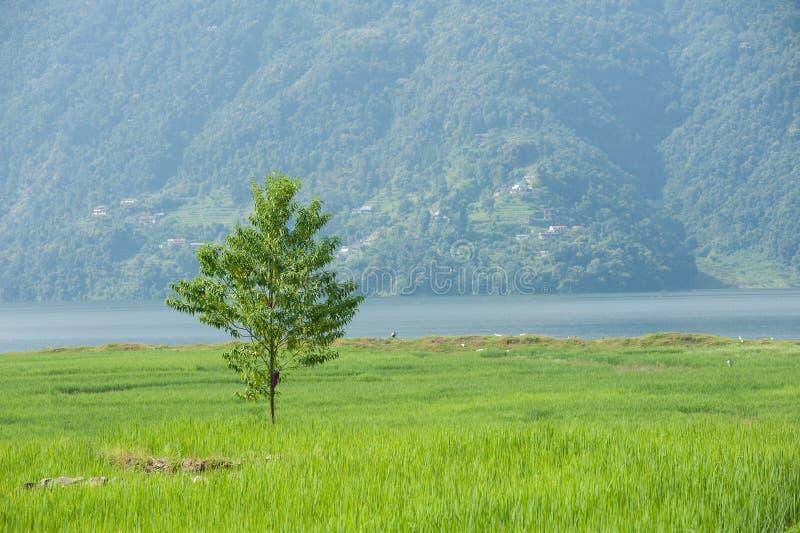 Зеленый сиротливый вал стоковые фотографии rf