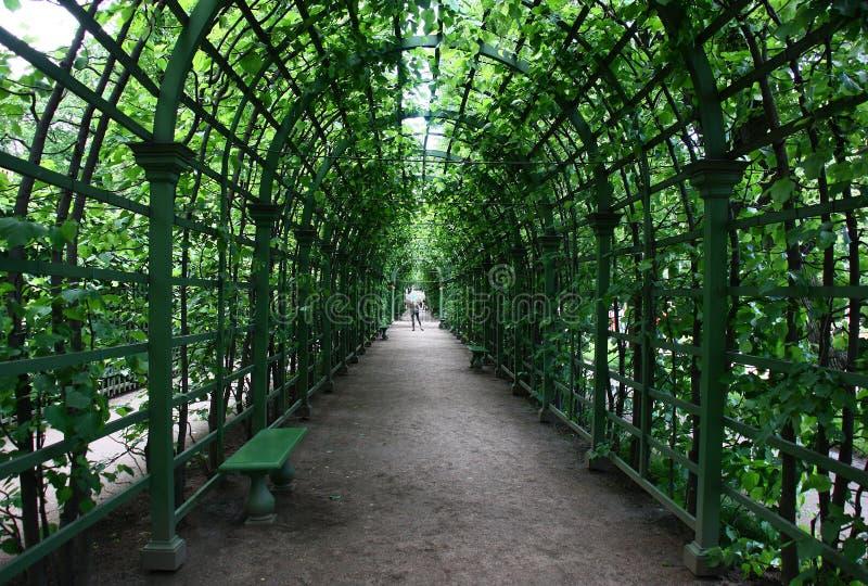 Зеленый тоннель сада лета стоковое изображение