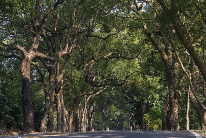 зеленый тоннель стоковое изображение