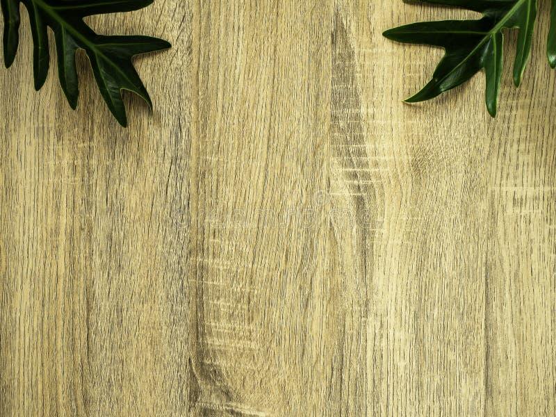 Зеленый тропик выходит рамка с космосом экземпляра на древесину стоковая фотография rf