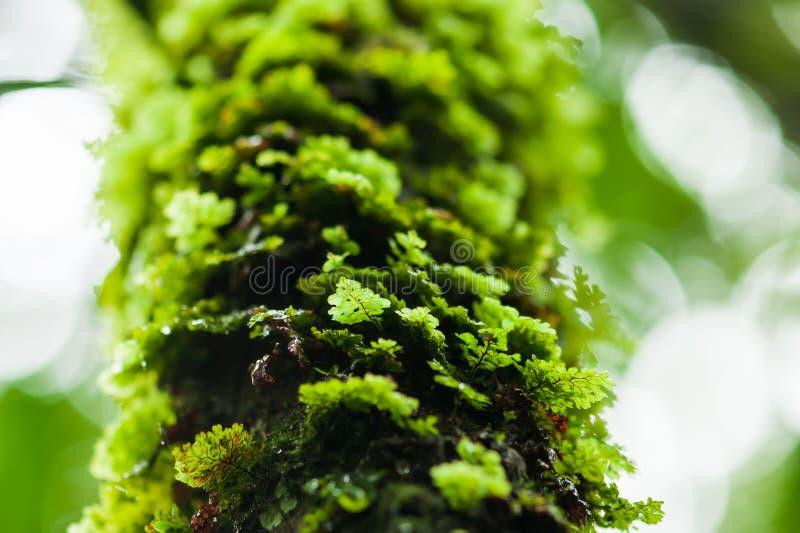 Зеленый ферн растет на тропическом дереве стоковое фото rf
