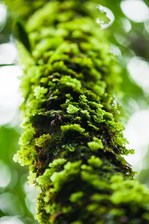 Зеленый ферн растет на тропическом дереве стоковые изображения rf