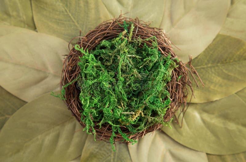 Зеленый фон цифров Newborn стоковая фотография rf